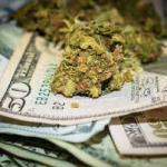 Cannabis Company Notes for February 2020