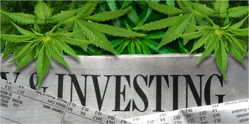 Why You Should Invest in the Cannabis Industry