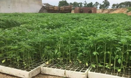 NEW YORK BASED HEMP FARM FILES FOR $20 MILLION DOLLAR OFFERING
