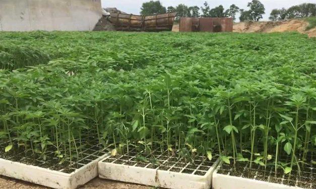 NEW YORK BASED HEMP FARM FILES FOR $20 MILLION DOLLAR OFFERING