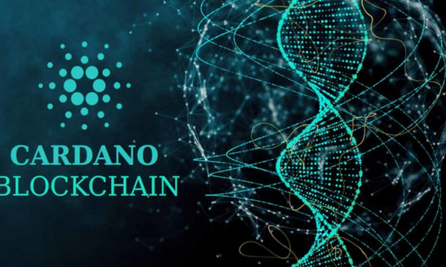 Cardano and the Rise of Shelly in a Covid-19 World